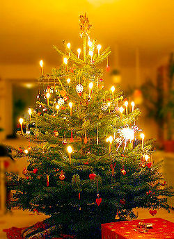 pohon-natal2